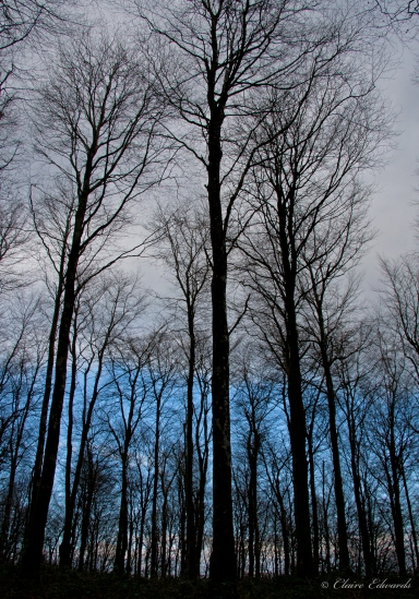 Forest of blue and grey