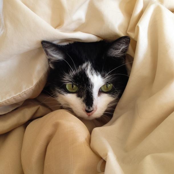 Luna getting snug